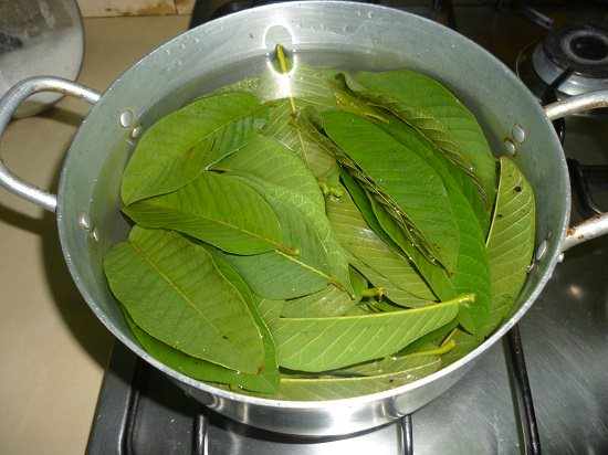 guava leaves2