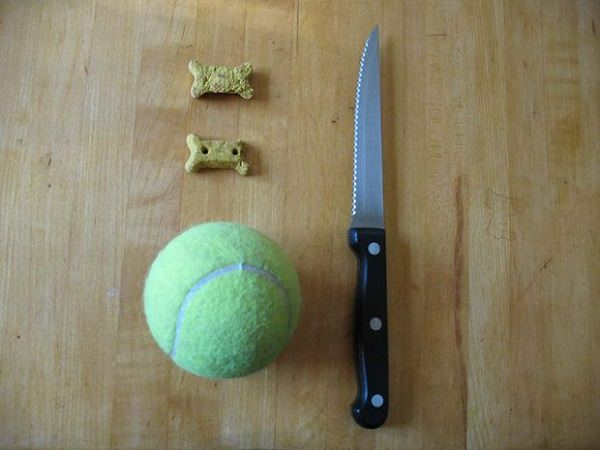 Homemade DIY Dog Toys to Keep Them Busy 6
