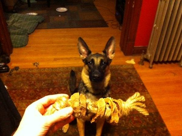 Dog Toys You Can DIY From Things Around the House 9