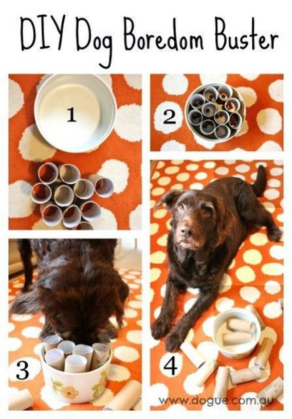 Dog Toys You Can DIY From Things Around the House