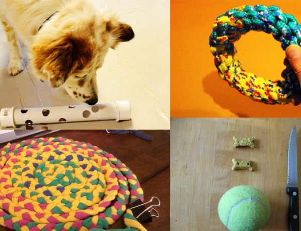 Irresistible DIY Dog Toy Ideas That You Can Make From Household Things3
