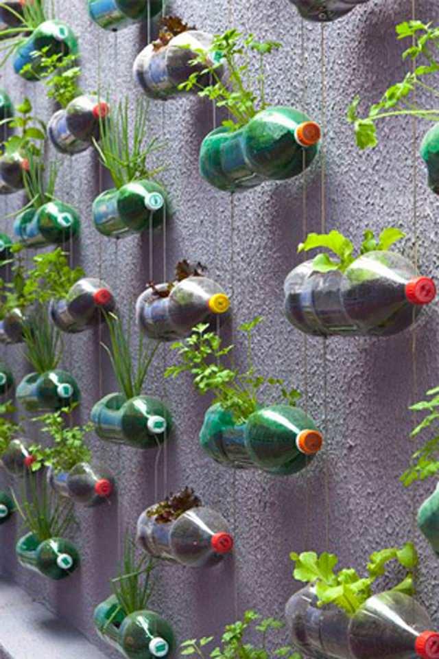 plastic bottle vertical gardening