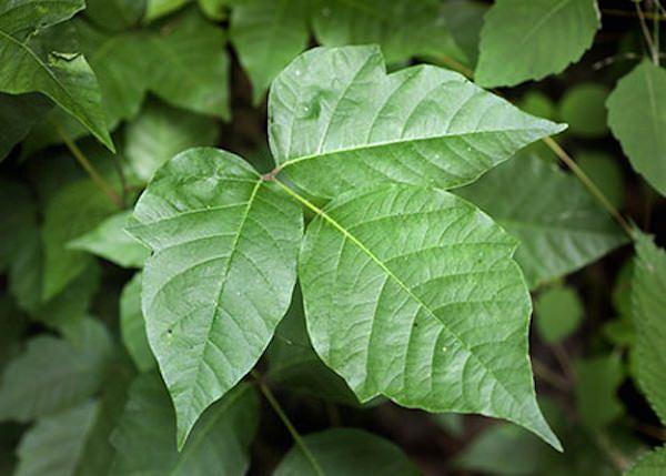 23. Poison Ivy Killer