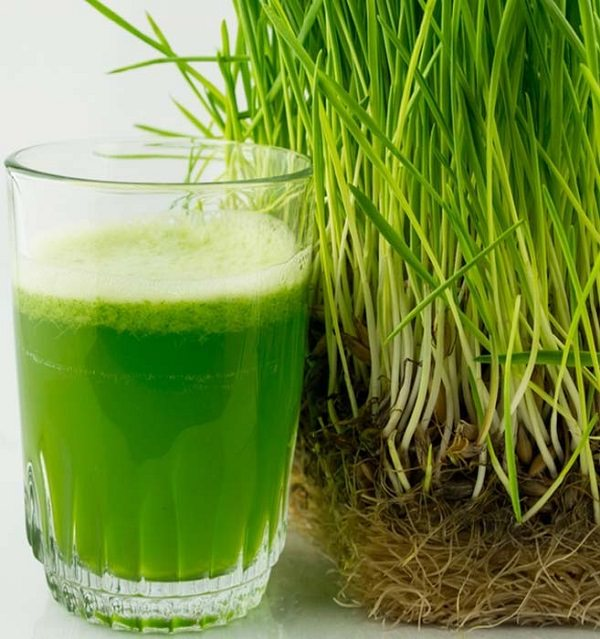 24. The relationship between barley grass and constipation explained