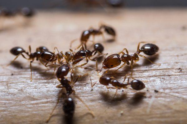 27. Ant Killer