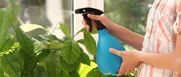 9. Kills Houseplant Bugs
