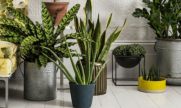 Air Purifier house plants
