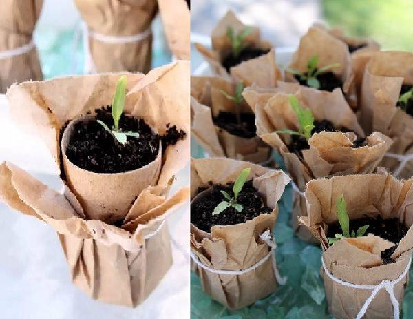 toilet papper seedling planter