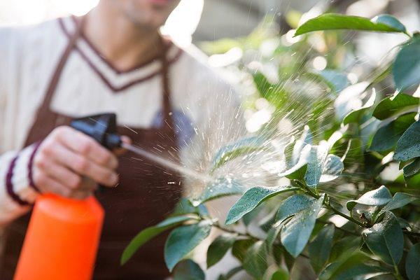 treat Boron Deficiencies in the Garden