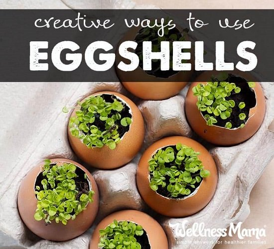 Eggshell Craft Ideas6