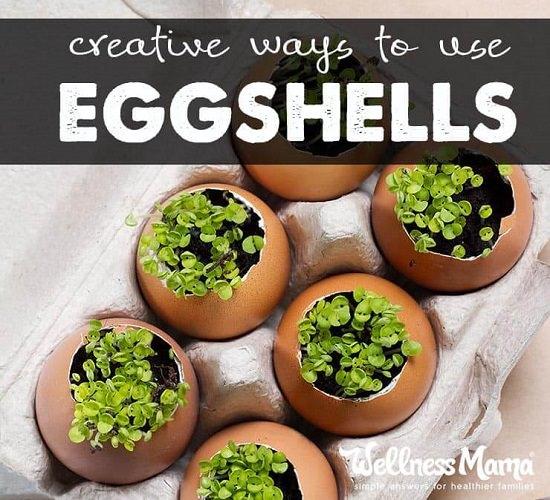 Eggshell Craft Ideas6