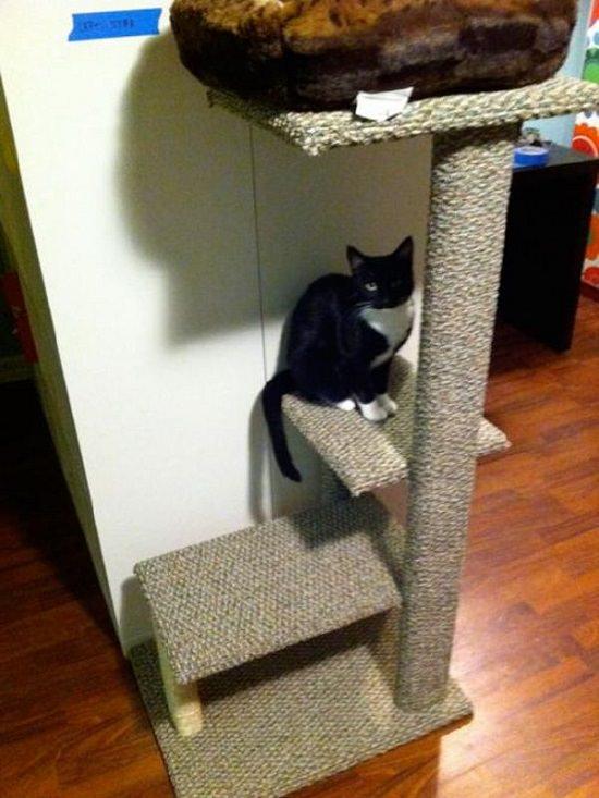 DIY Floating Cat Shelves