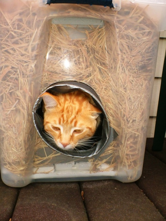 diy cat house ideas 5