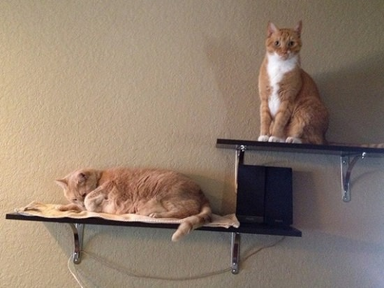 DIY Floating Cat Shelves