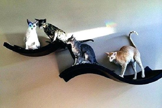 DIY Cat Shelves