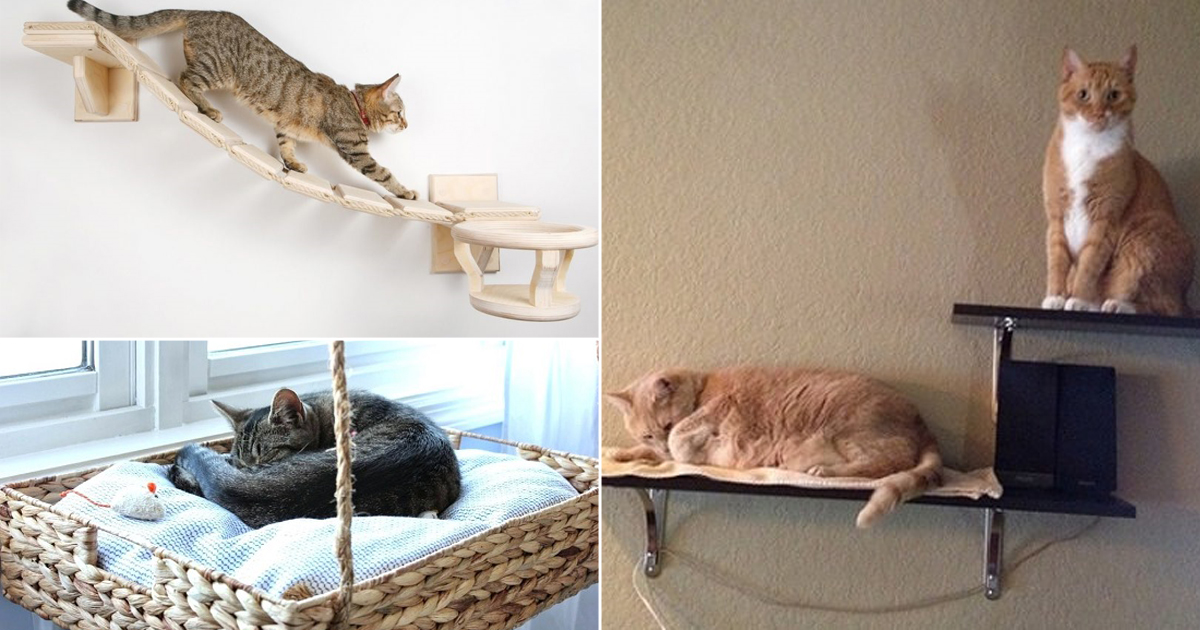 18 Diy Cat Shelves Ideas For Ultimate Cat Lovers Bright Stuffs