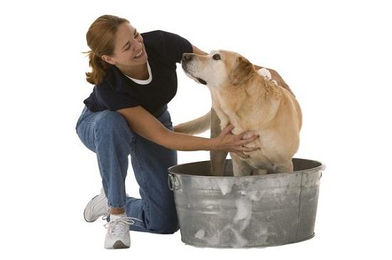 Best Homemade Dog Shampoo 5
