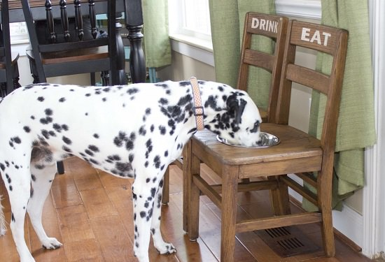 Dog Feeding Station Ideas 5