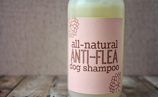 Best Homemade Dog Shampoo 13
