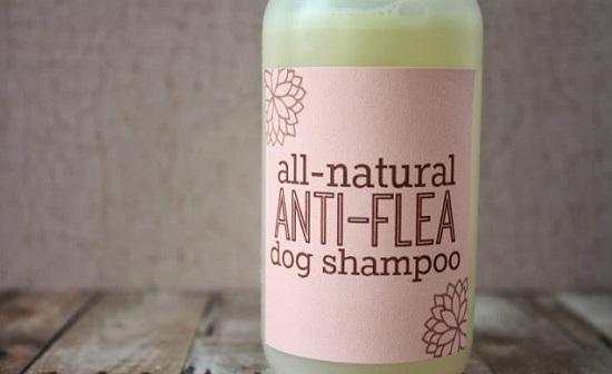 All-Natural Anti-Flea Dog Shampoo