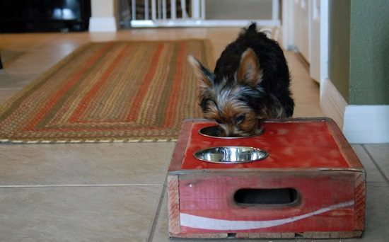 DIY Dog Feeding Station 6