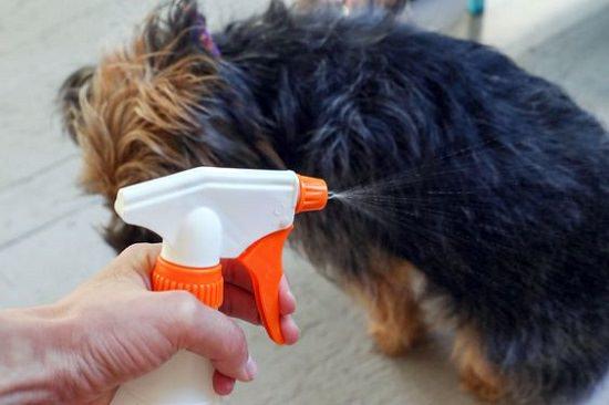 Homemade Rosemary Doggy Deodorant