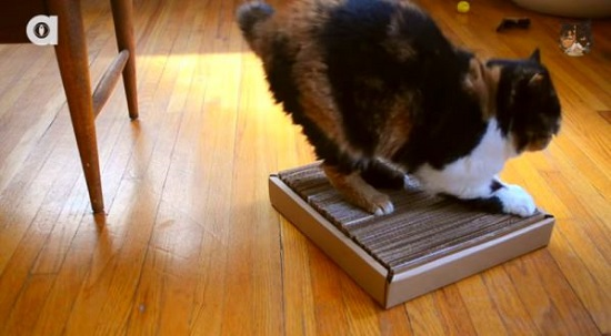 DIY Cardboard Cat Scratcher 2