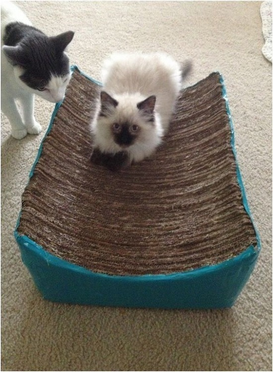 DIY Cat Scratcher Bed
