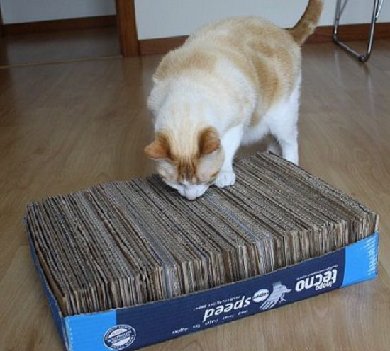 DIY Box Cat rub