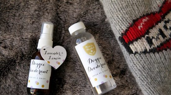 Easy and non-toxic DIY dog deodorant spray recipe