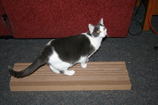DIY Cardboard Cat Scratcher 1