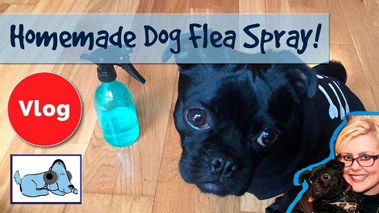 Homemade Flea Spray For Dogs 2