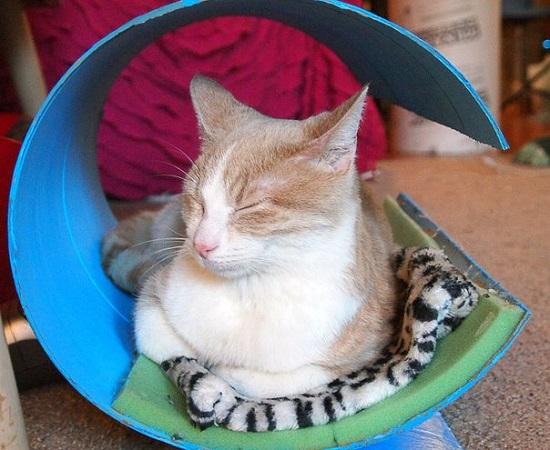 Modern Cat Shelter