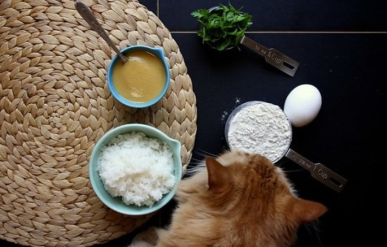 homemade cat treat recipes