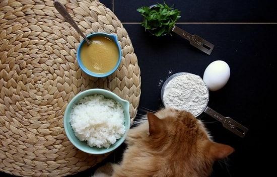 homemade cat treat recipes