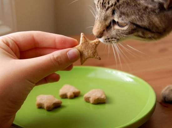 43 Diy Homemade Cat Treat Recipes