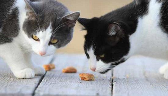 Homemade cat treats DIY