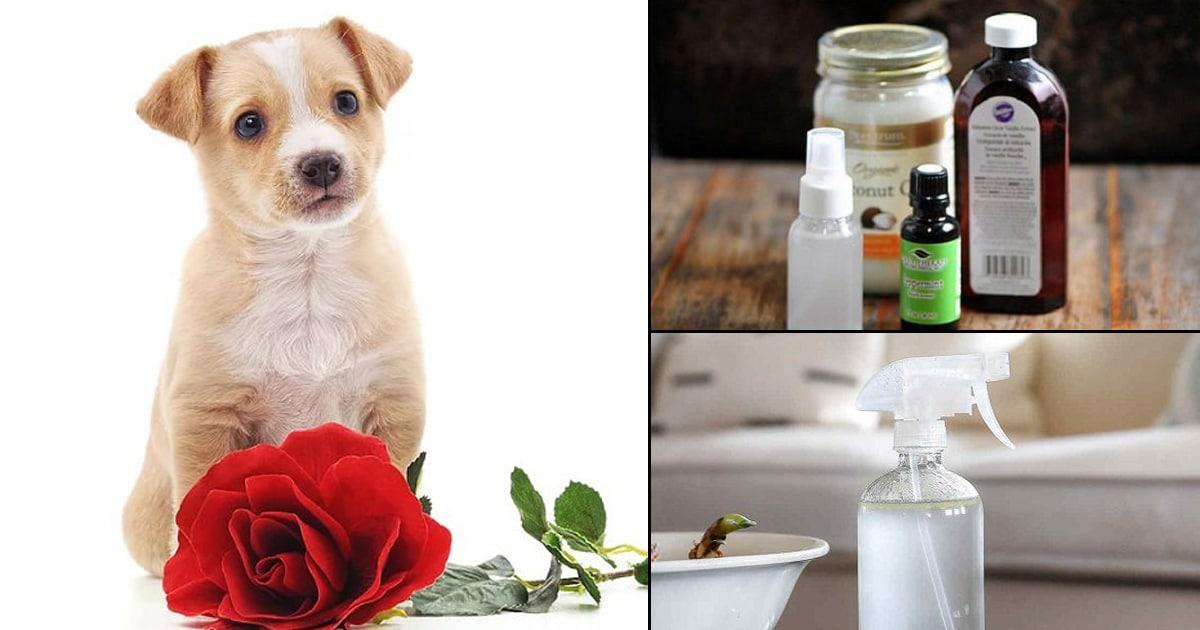 14 Homemade Deodorant Spray for Dogs | DIY Dog Deodorant ⋆ Bright Stuffs