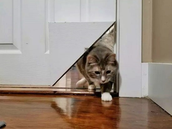 Corner Of Door Into a Cat Pass