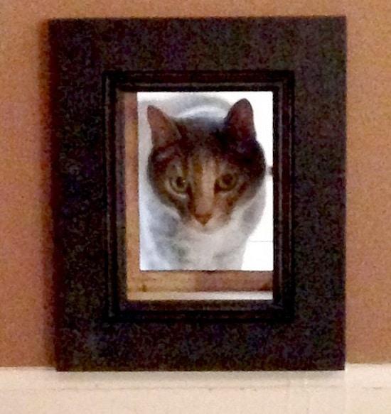 Cat Passageway Door