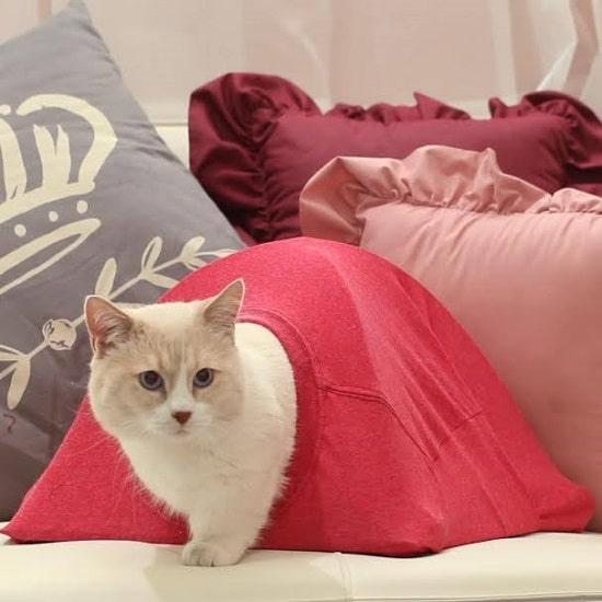 DIY Cat Tent15