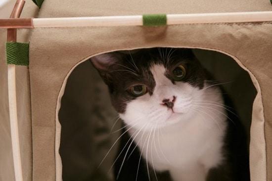 DIY Cat Tent18