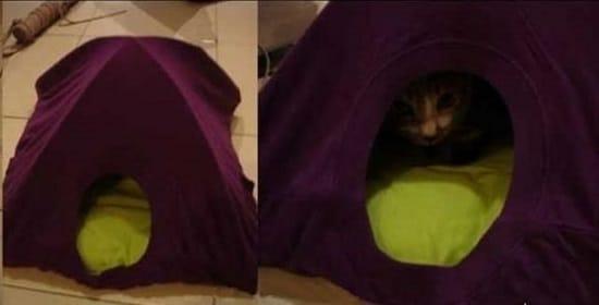 DIY Cat Tent6
