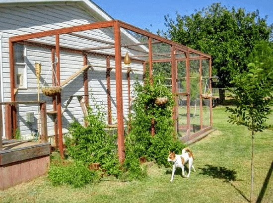 DIY Cat Enclosure Plans