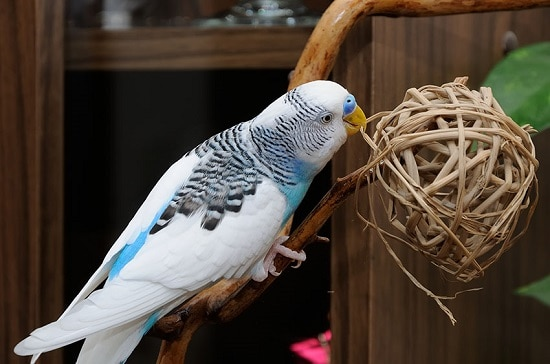 Make engaging homemade DIY Budgie Toys for your feathered friends with the help of these tutorials!