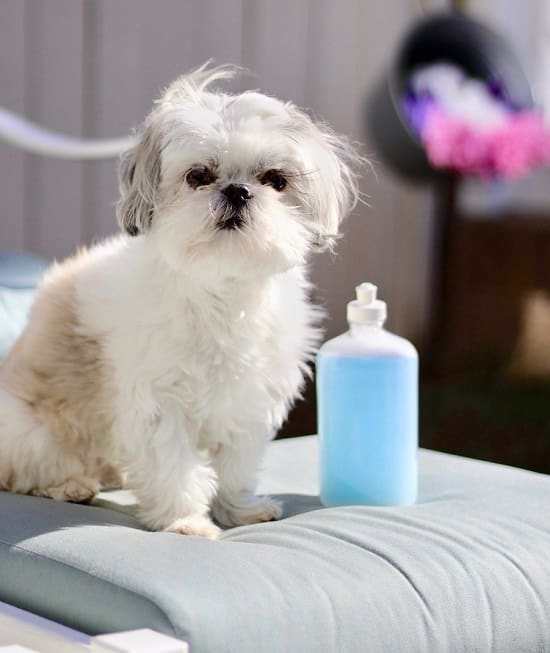 DIY Flea Shampoo For Dogs 2