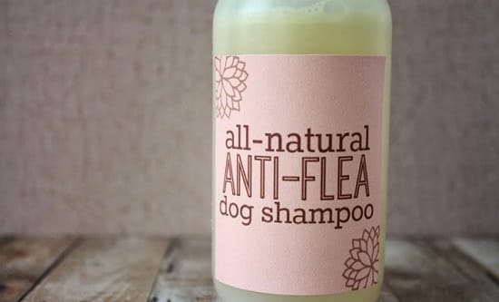 Anti-flea Shampoo