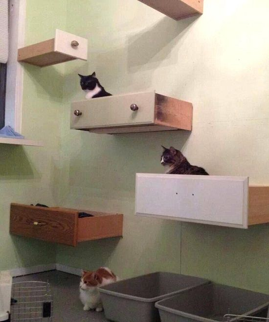 Upcycled Old Drawers Cat Shelves