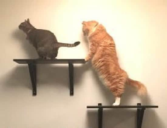 DIY Floating Cat Shelves2