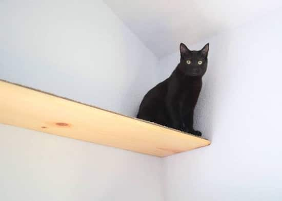 Simple Cat Shelves